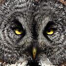 Those Eyes by Nancy Barrett