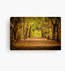 High Elms Woodland walk Canvas Print