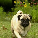 A Pug's Life by ladywings