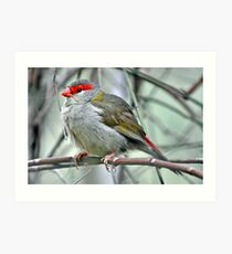 Red Browed Firetail Art Print