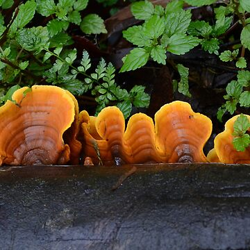 A touch of orange by suzichendesign