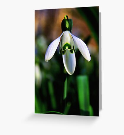 Good Morning Little Snowdrop Greeting Card