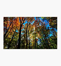 Stained Glass Trees Photographic Print