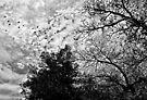 Birds Fly (Whisper to a Scream) by Scott Mitchell