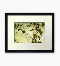 Autumn Leaves.... Framed Print