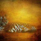 Tiger by John Rivera