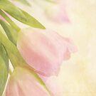 Tulip Whisper by Linda Trine