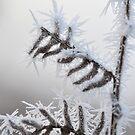 Frozen Bracken 2 by Kasia Nowak