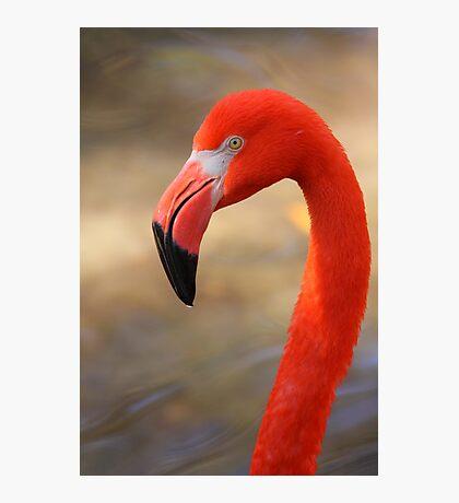 Flamingo Profile Photographic Print