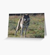 NORTH AMERICAN TIMBER WOLF Greeting Card