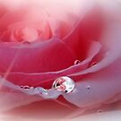 Pink Splendor by Morag Bates