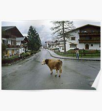 Lost cow, Austria, 1980s. Poster