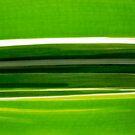 Natural lines by BANDERUS MARTIN