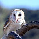 Barn Owl by loiteke
