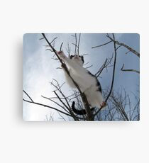 I dare one to land on me Canvas Print