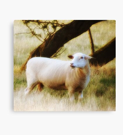 The Sheep Canvas Print