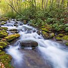 Oconaluftee Cascades - Great Smoky Mountains National Park, North Carolina by Jason Heritage