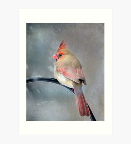 A Wee Bird ~ For Mike Oxley Art Print
