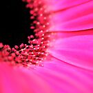 Pink implosion by Peter Dickinson