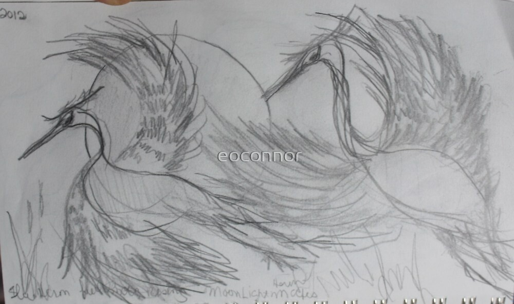 FIRST DRAW 2012 by eoconnor