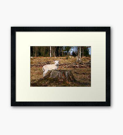 Mary's Little Lamb Framed Print