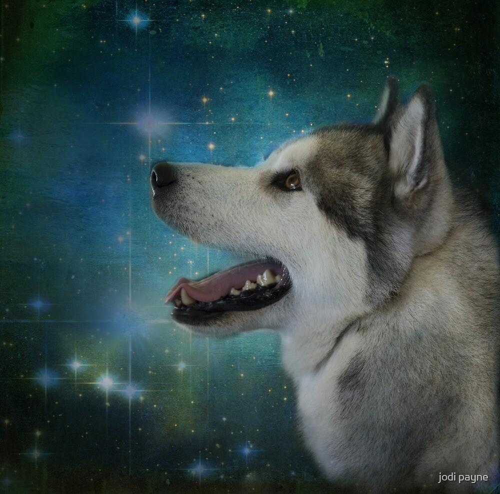 Polar Star Gazer by jodi payne