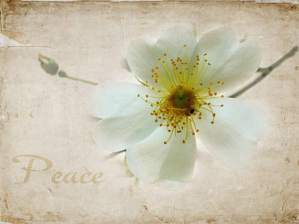 peace blossom by Kate Fortune