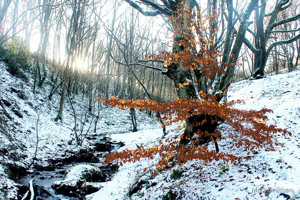 Autumn in Winter by Mark Smitham