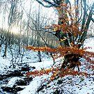 Autumn in Winter by Mark Smitham