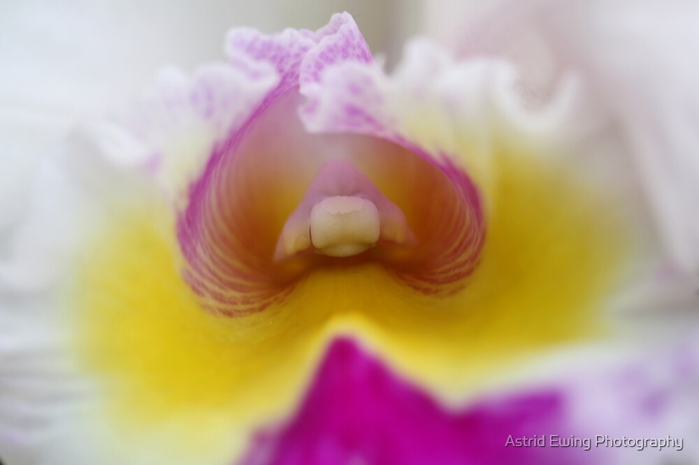 Orchid Pillow by Astrid Ewing Photography
