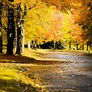 Autumn colours in Montreal  by Tamara Travers