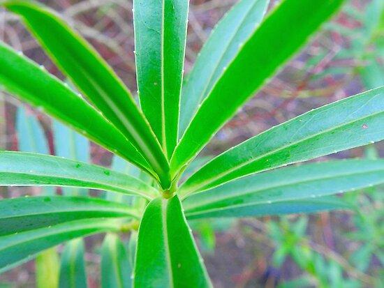 Green Leaf by bertie01