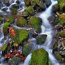 Nature's Kaleidoscope Of Colors by Jennifer Hulbert-Hortman