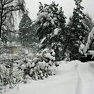 The Snowy season by homesick