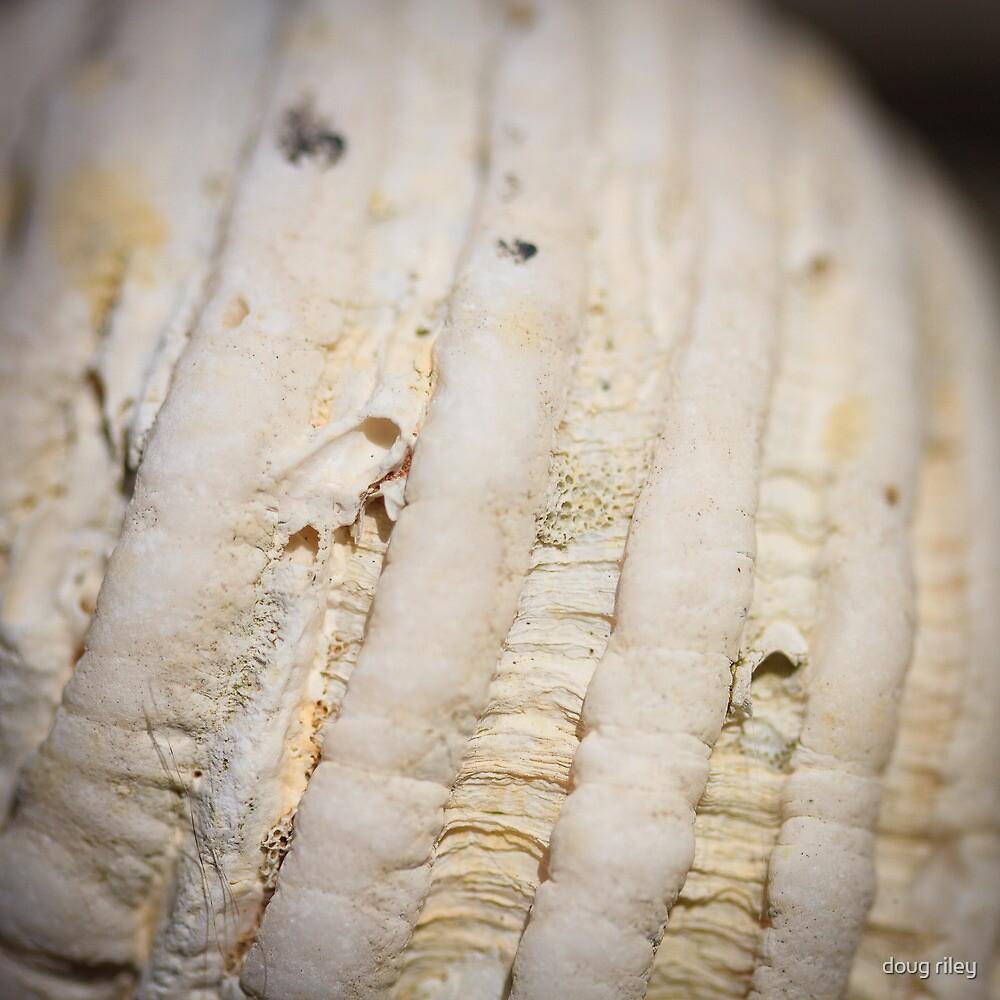 she sells - sea shells v by doug riley