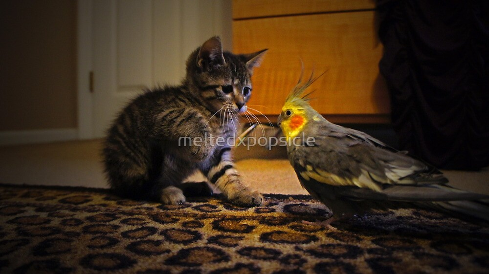 Kitten Meets Cockatiel by Jessica Liatys