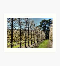 Fruit Trees in Perth Hills Art Print