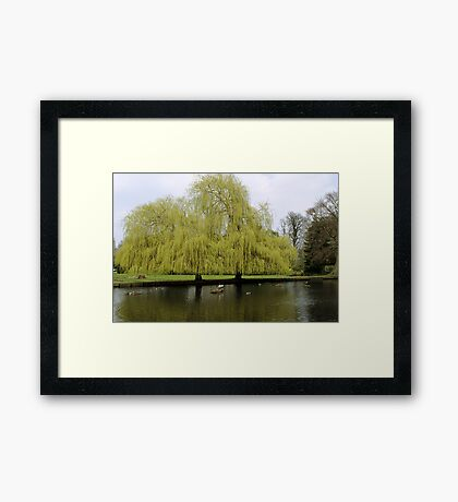 When Two Trees Become One Framed Print
