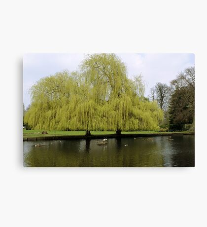 When Two Trees Become One Canvas Print