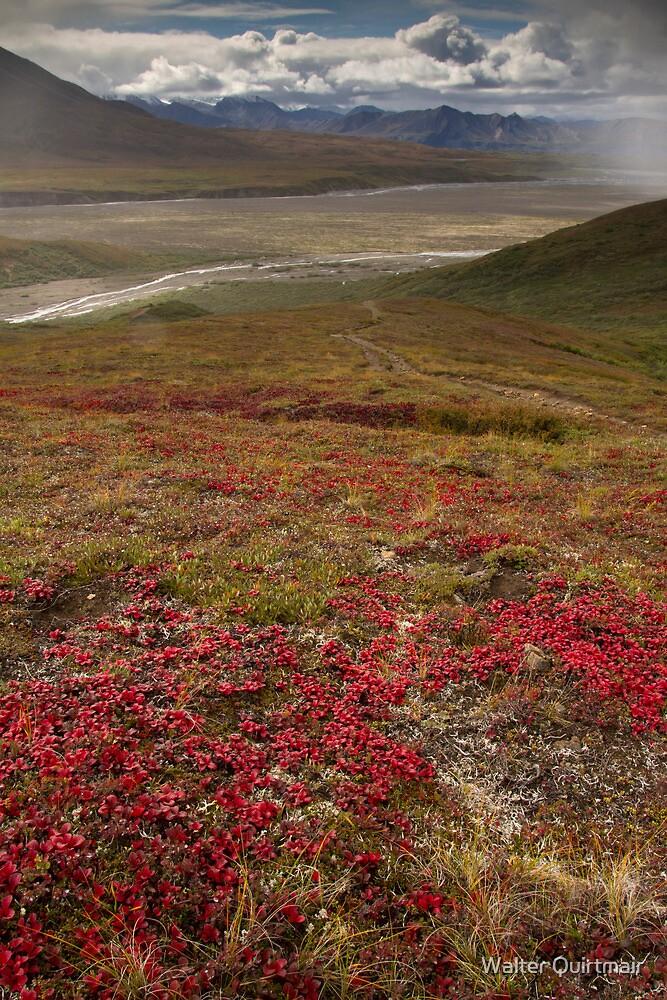 Wildflowers by Walter Quirtmair