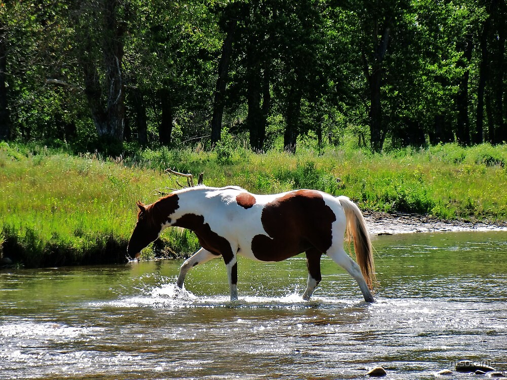 Leading a horse to water by ntsotame