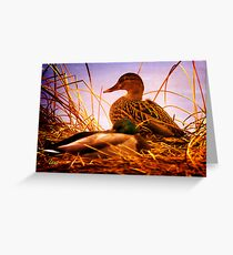 Ducks in the Rough Greeting Card