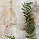 The Fern and the Crystal by Louise Linossi Telfer