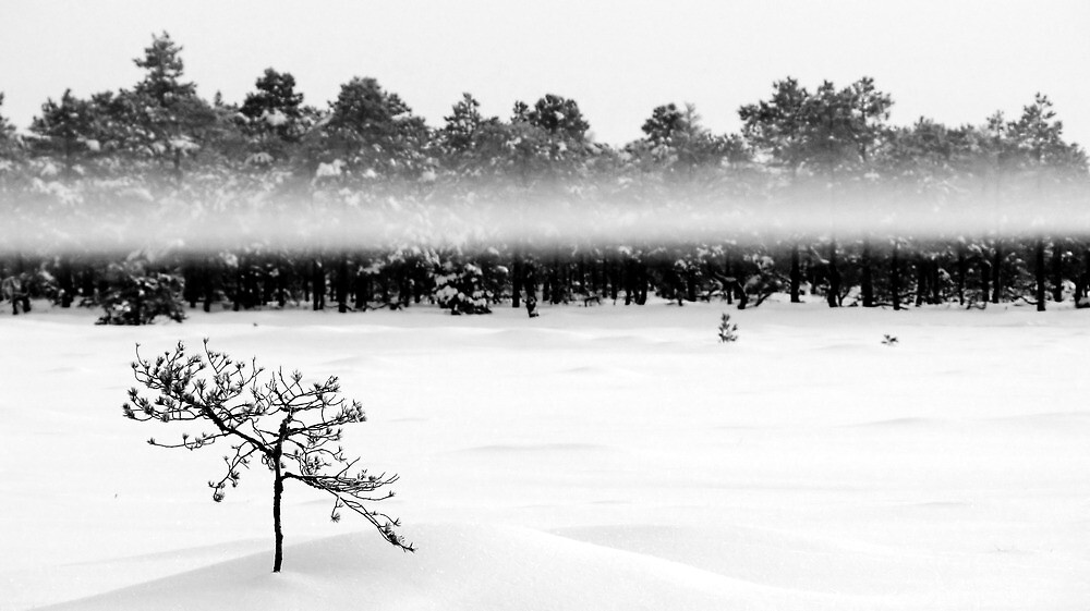 24.1.2012: Pine tree, Fog and Forest by Petri Volanen