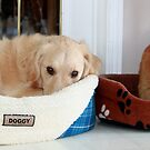 Milo and Ellie Ready for A Nap by Rose Landry