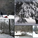 """Winter In The Park Collage"" by kkphoto1"