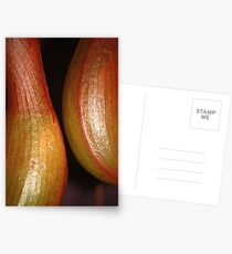 sensual curves and veins Postcards