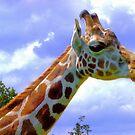 Giraffee by cherrytops