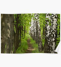 beautiful footpath in the forest Poster
