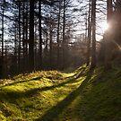 Pathway by Jon Bradbury